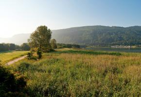 Bleistätter Moor